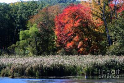 Poster featuring the photograph Fall Foliage Marsh by Smilin Eyes  Treasures