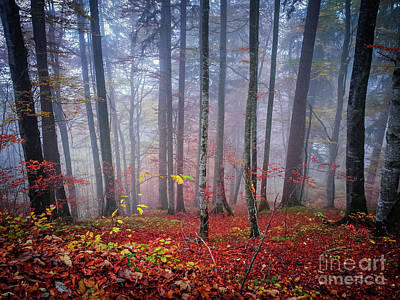 Fall Forest In Fog Poster