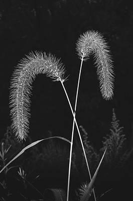 Fall Grass 2 Poster