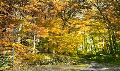 Fall In Bruceton Mills Forest Poster by Michael Forte