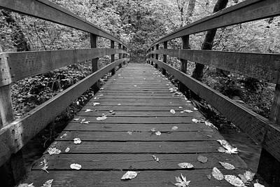 Fall In Oregon Bw Poster by Jonathan Davison