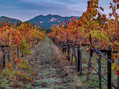 Fall In Wine Country Poster by Bill Gallagher