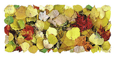 Fall Leaf Vignette Poster by JQ Licensing