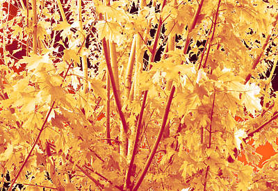 Fall Leaves #1 Poster