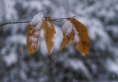 Fall Leaves In Snow Poster