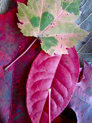 Fall Leaves Poster by Lori Miller