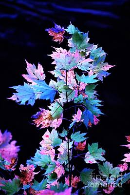 Fall Leaves1 Poster