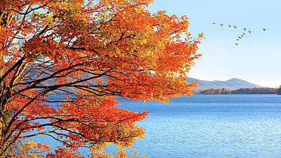 Fall Maple Tree Graces Smith Mountain Lake, Va Poster by The American Shutterbug Society