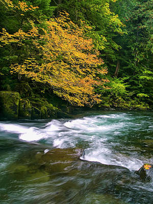 Fall On The Clackamas River, Or Poster