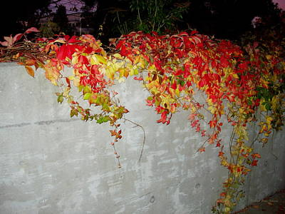 Fall On The Wall Poster by Deborah  Crew-Johnson