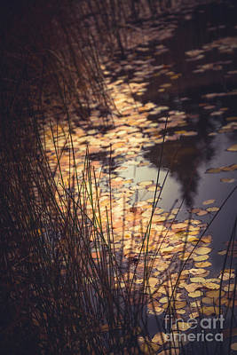Poster featuring the photograph Fall Pond by The Forests Edge Photography - Diane Sandoval