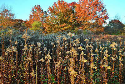 Poster featuring the photograph Fall Prairie In Moraine Hills by Ray Mathis