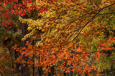 Fall Rainbow Of Colors Poster by Terry DeLuco