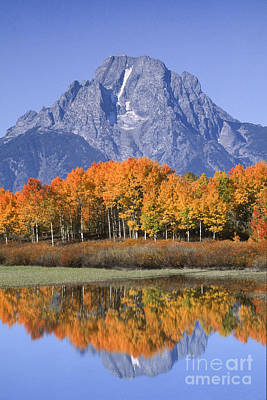 Fall Reflection At Oxbow Bend Poster by Sandra Bronstein