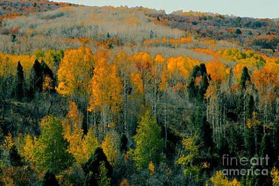 Fall Ridge Poster