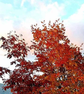 Fall Splendor And A Pastel Sky Poster