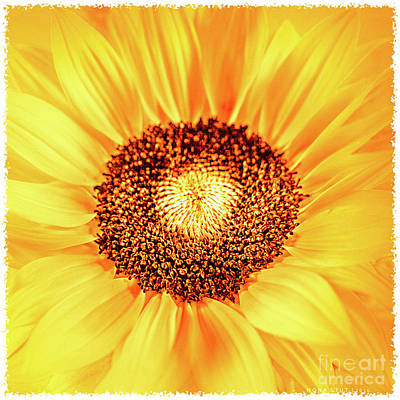 Fall Sunflower Poster by Mona Stut