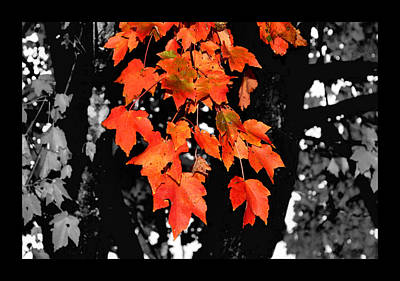 Fall Tree Poster by Karen Scovill
