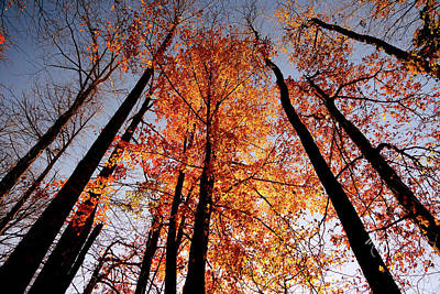 Fall Trees Sky Poster by Meta Gatschenberger