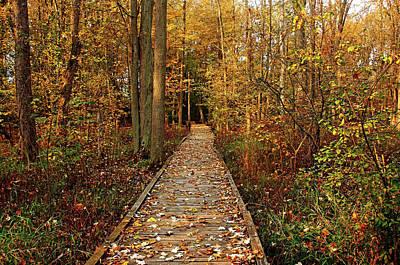 Fall Walk Poster