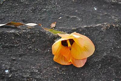 Fallen Flower Poster