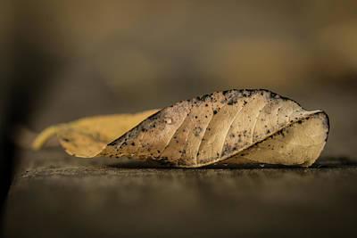 Fallen Leaf Poster by Hyuntae Kim