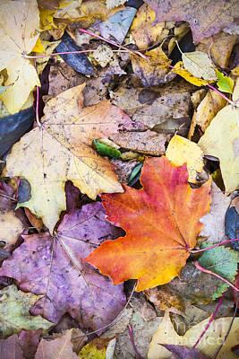 Fallen Leaves Poster by Lasse Ansaharju
