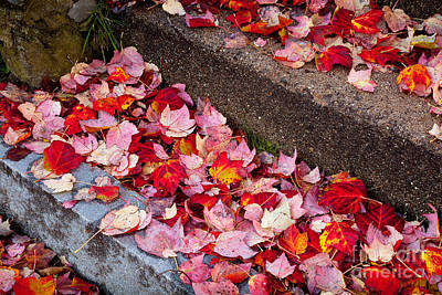 Fallen Leaves On The Steps Poster by Susan Cole Kelly