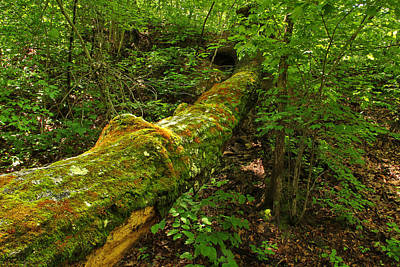 Fallen Tree And Moss Along The Ozark Trail Poster by Greg Matchick