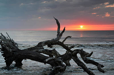Fallen Tree In Ocean At Sunrise Poster by Bruce Gourley