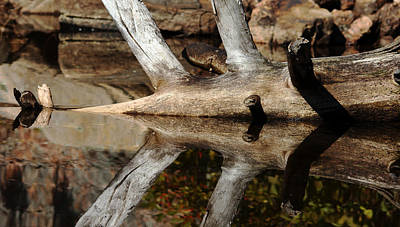 Poster featuring the photograph Fallen Tree Mirror Image by Debbie Oppermann