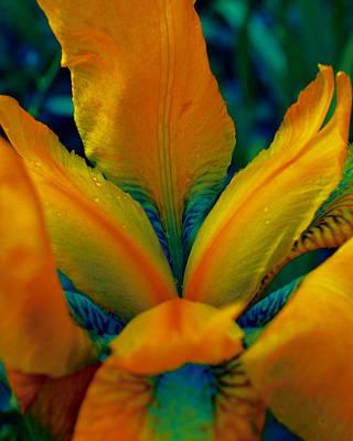 False Color Iris 1 Poster by Karen Musick