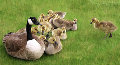 Family Huddle - Canada Goose And Goslings Nature Painting Poster by Rayanda Arts