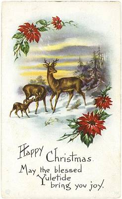 Family Of Deer With Partial Poinsettia Poster by Gillham Studios