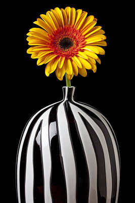Fancy Daisy In Stripped Vase  Poster by Garry Gay