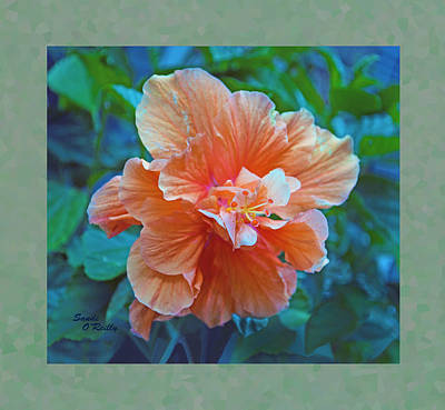 Fancy Peach Hibiscus Poster