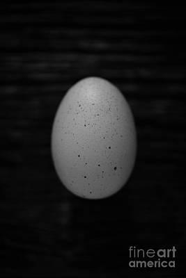 Farm Fresh Egg Poster by Edward Fielding