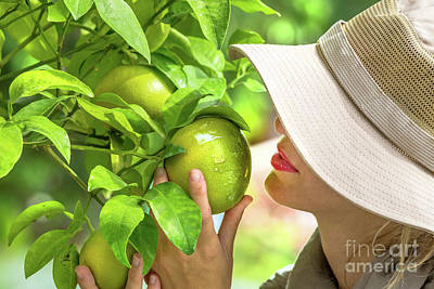 Farmer Checking Lemons Poster