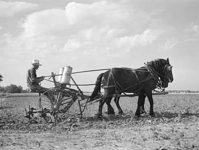 Farmer Fertilizing Corn Poster