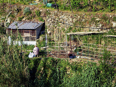 Farming In Cinque Terre Italy Poster by Joan Carroll