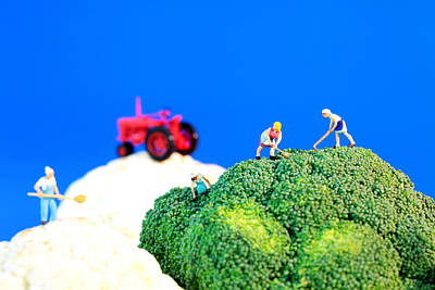 Farming On Broccoli And Cauliflower II Poster by Paul Ge