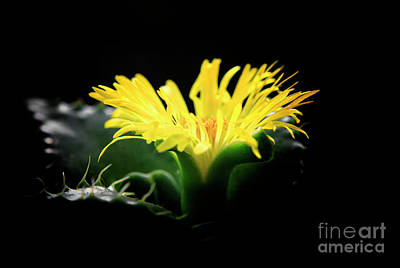 Poster featuring the photograph Faucaria Tigerina Tiger's Jaw by Charline Xia