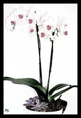 Favorite Gift Of Orchids Poster by Marsha Heiken