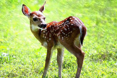 Fawn Deer In Field Oil Painting Poster by Design Turnpike