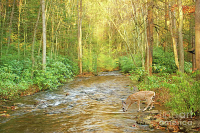 Fawn Drinking From Stream Poster