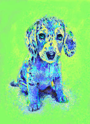 Green And Blue Dachshund Puppy Poster