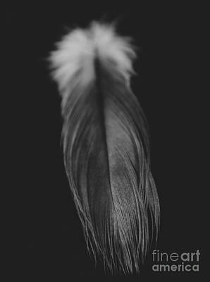 Feather In Black And White Poster
