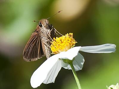 Feeding Moth Poster by Kenneth Albin
