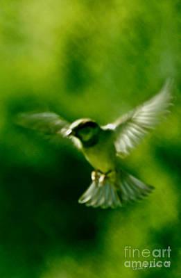 Feeling Free As A Bird Wall Art Print Poster by Carol F Austin