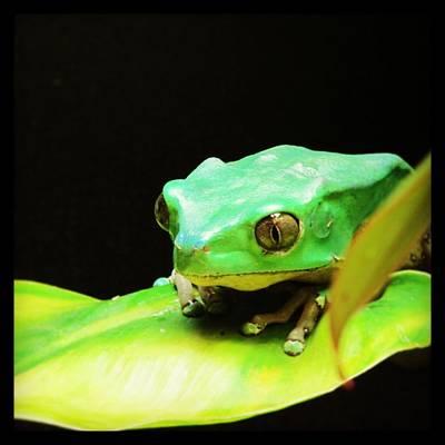 Feeling Froggy Poster